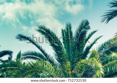 Tropical background of palm trees against blue sky. - Shutterstock ID 752732530
