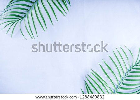 Tropical background. Palm and monstera leaves on yellow blue  background. Flatlay, top view, minimal layout, summer concept #1286460832