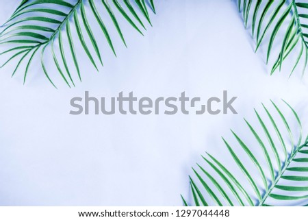 Tropical background. Palm and monstera leaves on yellow blue  background. Flatlay, top view, minimal layout, summer concept #1297044448
