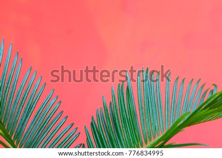Tropical Background Palm Trees Branches. Holiday. Travel. Copy space - Shutterstock ID 776834995