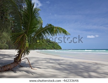 Tropical background with palm tree. beach and sea