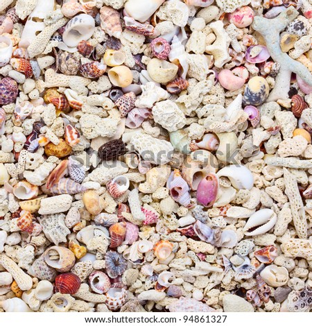 Tropical background with sea shells, coral and sand