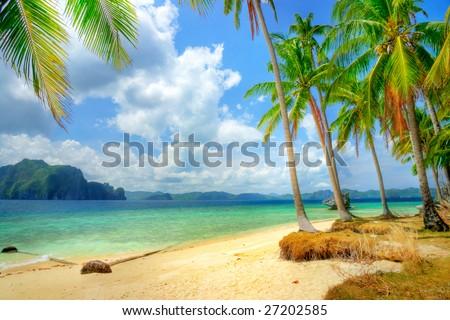 tropical beach #27202585