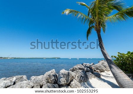Tropical beach and palm tree in the Florida Keys, this is a very popular tourist attraction.