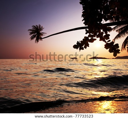 Tropical beach at dark