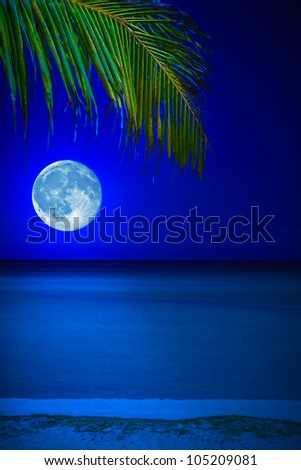 Tropical beach at night with a full moon reflecting on the water and a coconut palm on the foreground