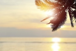 Tropical beach background at sunset (sunrise) with coconut palm tree