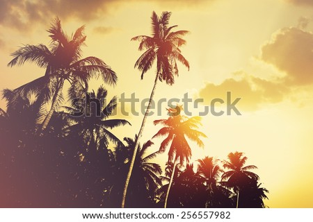 Tropical beach background with coconut palm tree silhouettes at sunset Instagram effect vintage