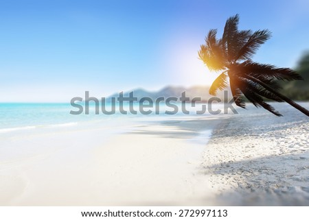 Tropical beach background with palm tree and ocean.