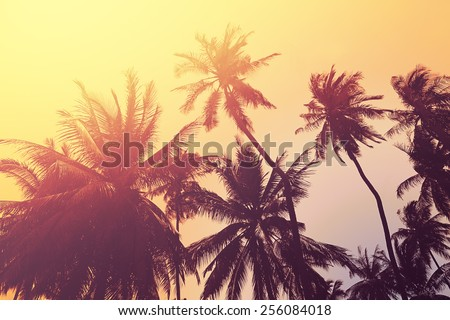 Tropical beach background with palm tree silhouettes at sunset