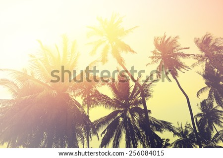 Tropical beach background with palm tree silhouettes at sunset. Vintage effect.