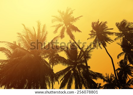 Tropical beach background with palm trees silhouette at sunset