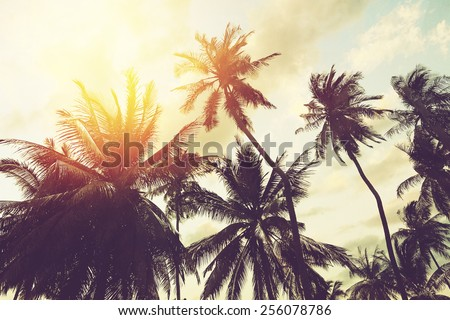 Tropical beach background with palm trees silhouette at sunset. Vintage effect. #256078786
