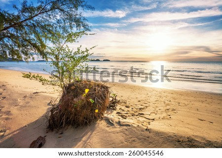 Tropical beach in ebb time on sunset background #260045546