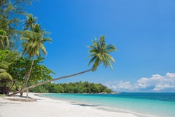 Tropical beach landscape with a leaning palm tree on Bintan island, Indonesia