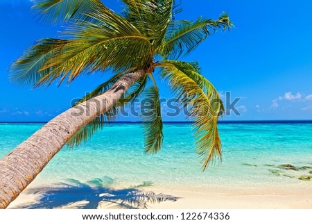 Tropical beach on the island Vilamendhoo in the Indian Ocean Maldives