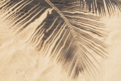 Tropical beach sand with shadows of coconut palm tree leaves. Travel and vacations concept background.