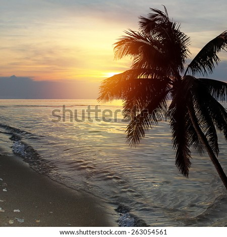 Tropical beach sunset background with palm tree silhouette.