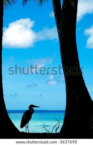Tropical beach with bird