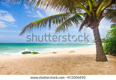 tropical beach with coconut palm #451006690