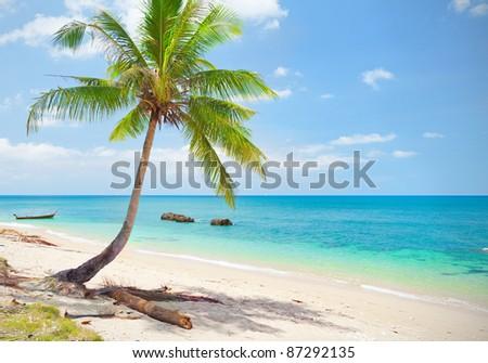 tropical beach with coconut palm. Koh Lanta, Thailand #87292135