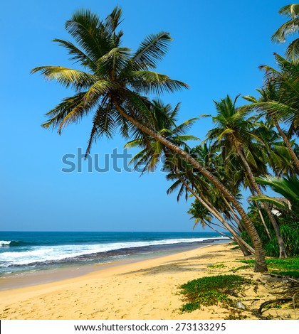 Tropical beach with palm in Sri Lanka #273133295