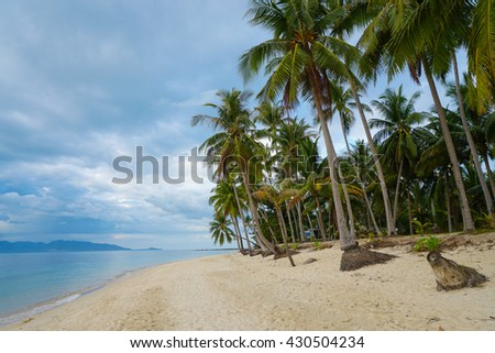 Tropical beach with palm tree against cloudy sky #430504234