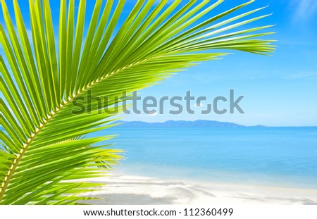 Tropical beach with palm tree and sand