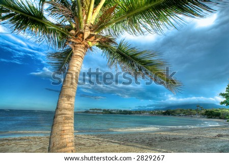 Tropical beach with palm tree, Caribbean