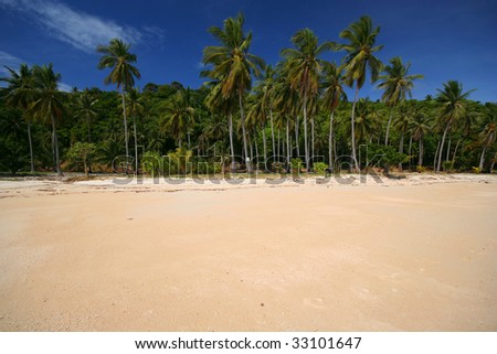 Tropical Beach With Palm Trees and Copyspace #33101647