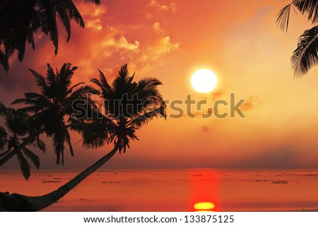 Tropical beach with palm trees at sunset time and reflections on water surface.