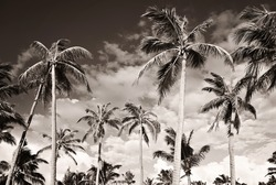 Tropical beach with palm trees. Monochrome. Black and white. Summer vacation concept