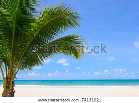 Tropical beach with palm trees near blue sea. Exotic summer vacation.
