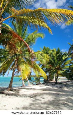 Tropical beach with palms, caribbean sea