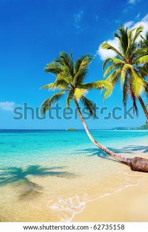 Tropical beach with palms, Kood island, Thailand #62735158