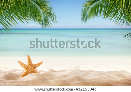 Tropical beach with sea-star in sand, copyspace for text. Concept of summer relaxation #432153046