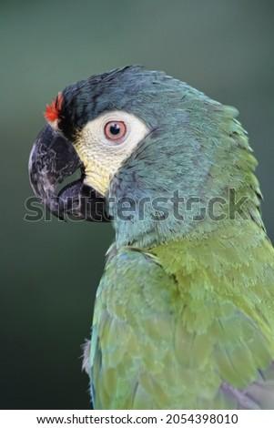 Tropical bird found in the Parque das Aves in Brazil Foto stock ©