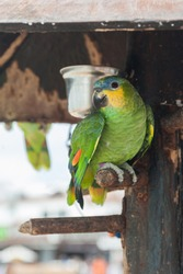 Tropical bird parrot sitting on a plank