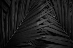 tropical Black and white palm leaf and shadow, abstract natural background, dark tone,Black and white