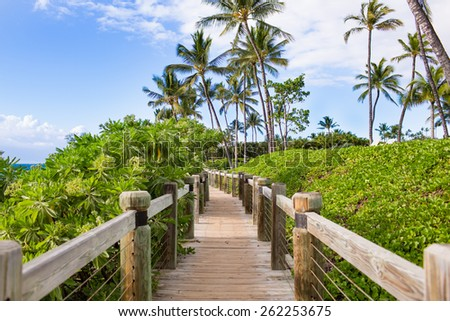Tropical boardwalk with palm trees