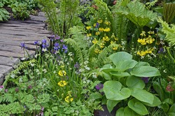 Tropical bog garden with mixed planting of water loving flowers and plants