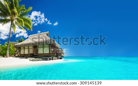 Tropical bungalow on the amazing beach with a palm tree