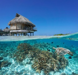 Tropical bungalow overwater and coral reef with a sea turtle underwater, split view over and under water surface, French Polynesia, Pacific ocean, Oceania