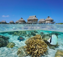 Tropical bungalows overwater and fish with coral underwater, split view over and under water surface, French Polynesia, Pacific ocean, Oceania