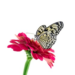 tropical butterfly and red flower