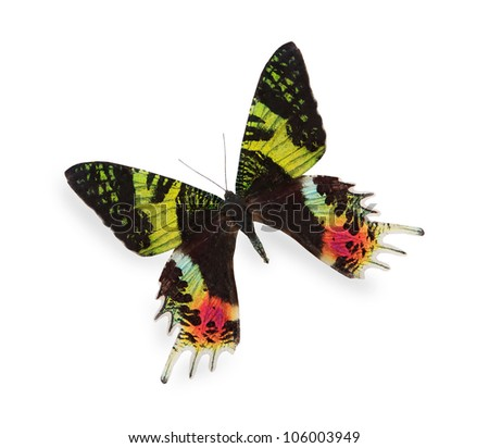 Tropical butterfly isolated on white