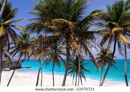 Tropical caribbean beach / Bottom Bay / Barbados