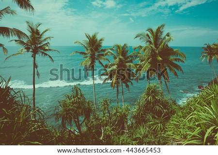 tropical coast with palm trees...