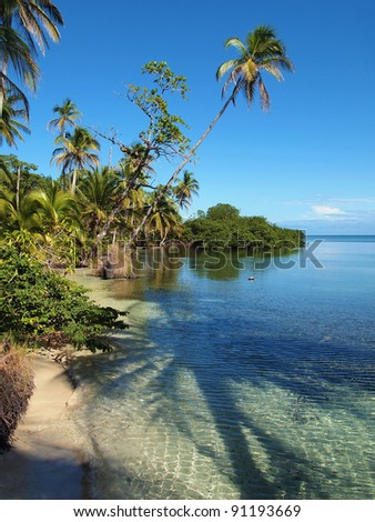Tropical coast with the shade of a coconut tree in the water, Caribbean, Panama