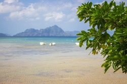 Tropical coastal landscape with tree on foreground and white boats on unfocused background. Philippines isles landscape. Low tide with boats and mountains on background. Asian travel and vacation.